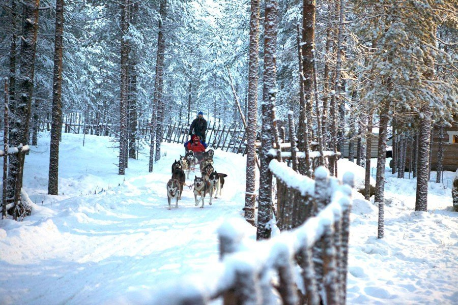 Husky dogs, travel expert,lapland,christmas,santa clause