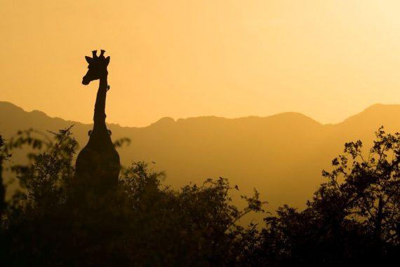 luxury capetown, winelands and safari