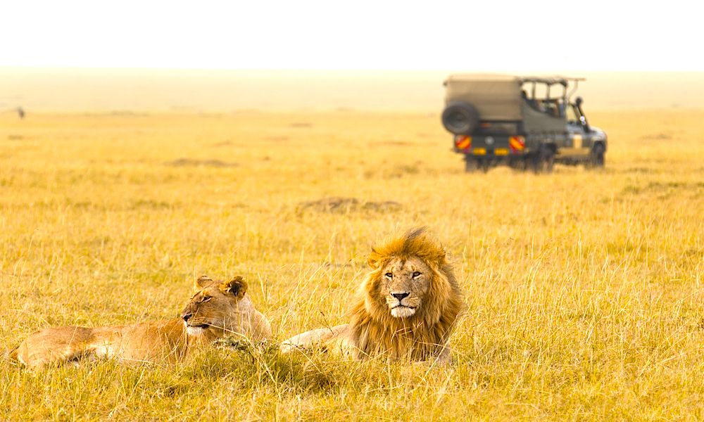 Luxury African Safari Holidays in South Africa, Kenya and Tanzania