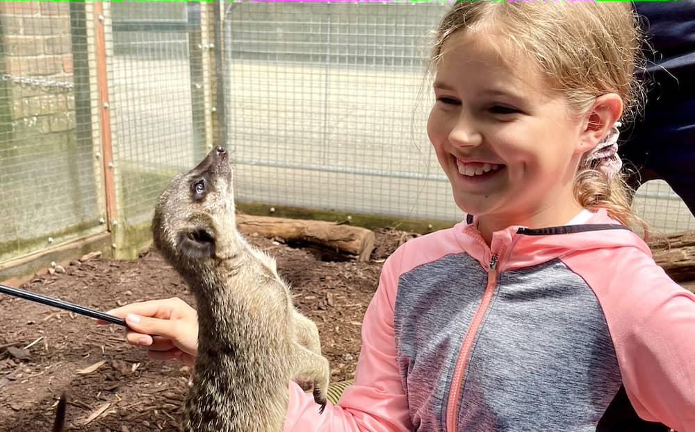 Wells House & Gardens - meerkat experience