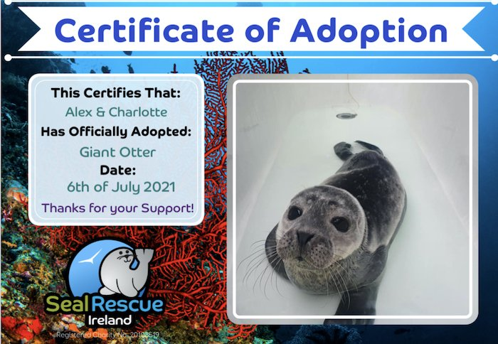Adopt a seal at the Seal Rescue Centre is one of the top things to do in Wexford with kids