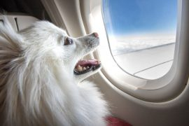 pets on planes