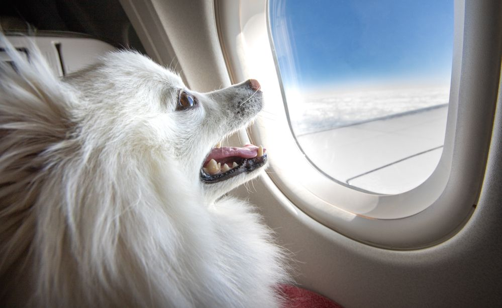 What Airlines Allow Pets On Planes - The Travel Expert