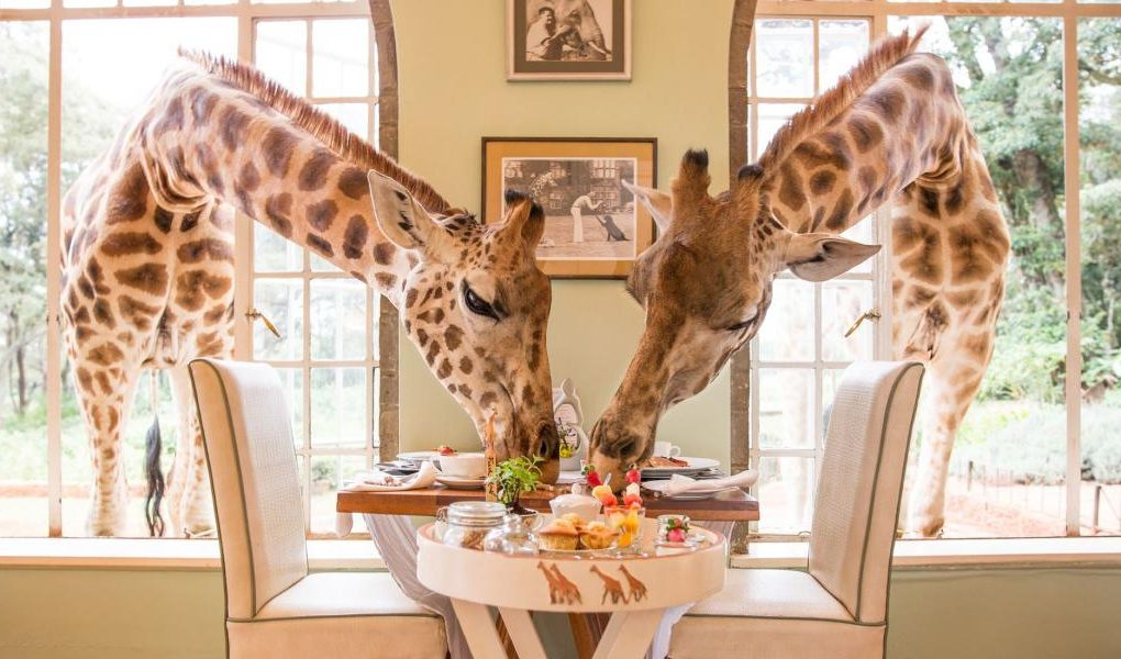 119389-Breakfast-004-Cr-Giraffe-Manor-The-Safari-Collection