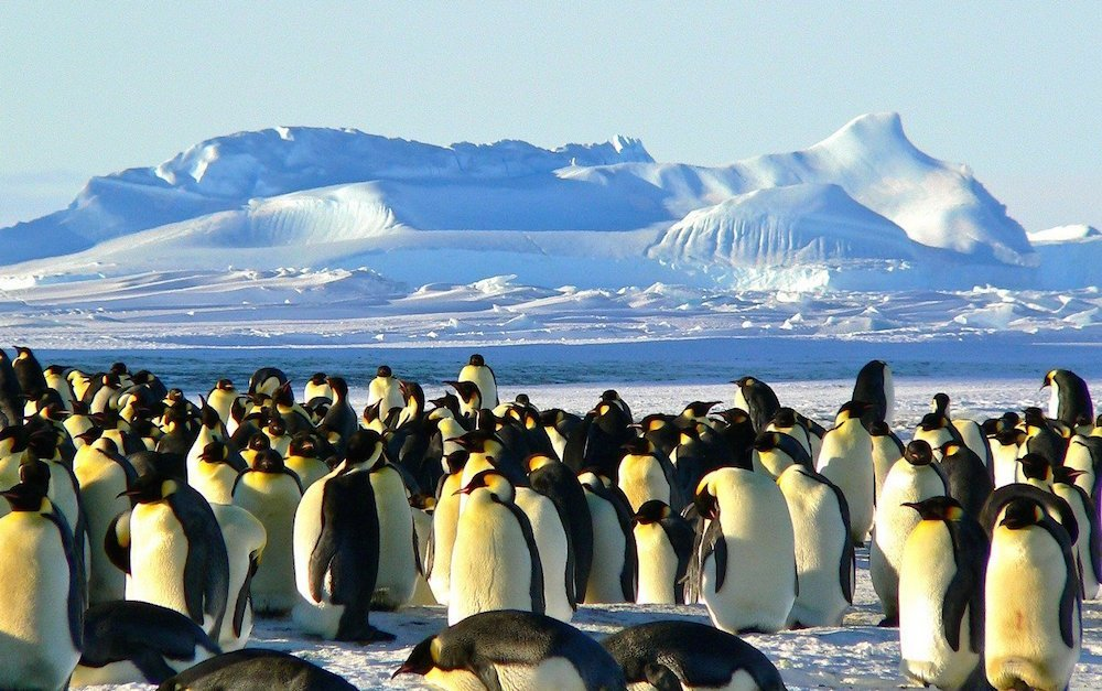 antartica bucket list holidays