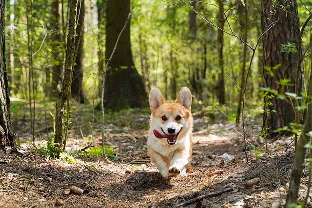 dog friendly hotels in northern ireland