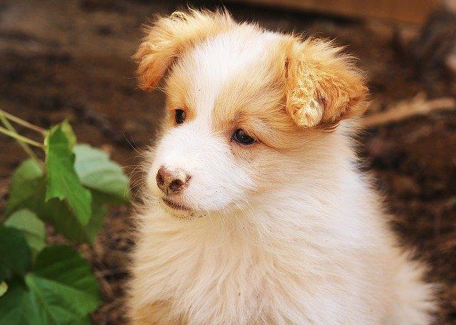 dog friendly hotels in ireland