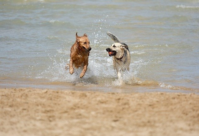dog friendly hotels in galway