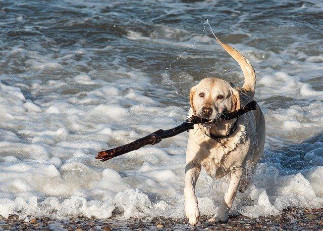 dog friendly holidays in ireland