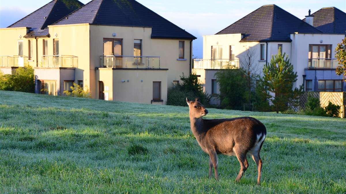 hotels with lodges in ireland - waterford castle