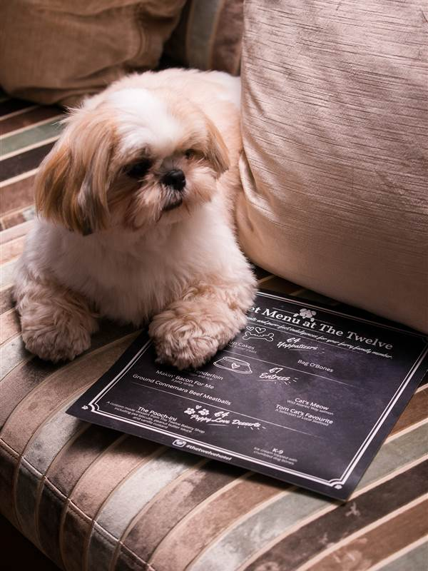 one of the best dog friendly hotels in ireland