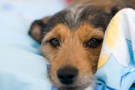 dog friendly Airbnbs in Ireland