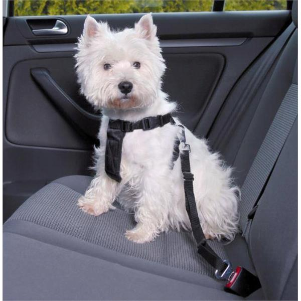 travel accessories for dogs