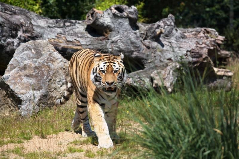 Zoo at Tayto Park