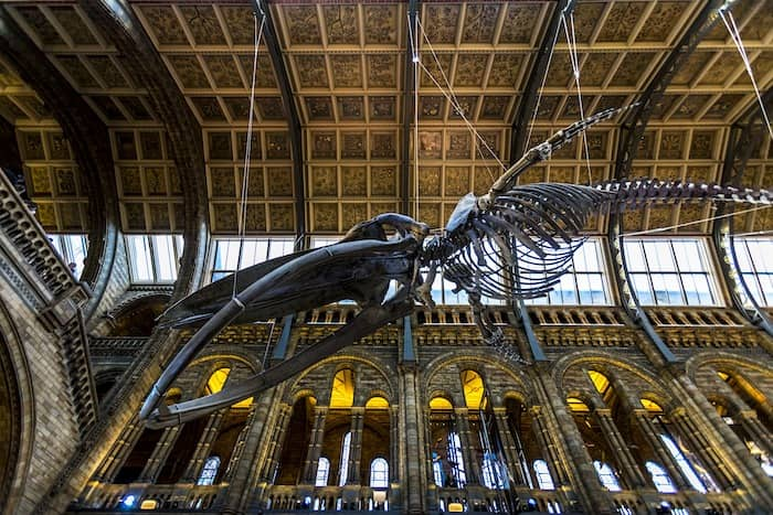 Natural History Museum is one of the London's free attractions