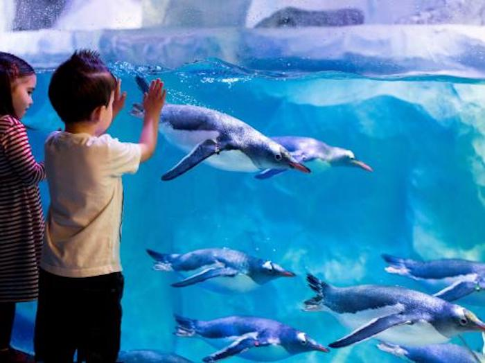 Sea Life Aquarium is a popular family attraction in London