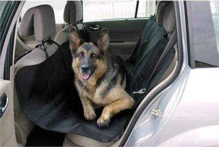 car accessories for travelling with dogs