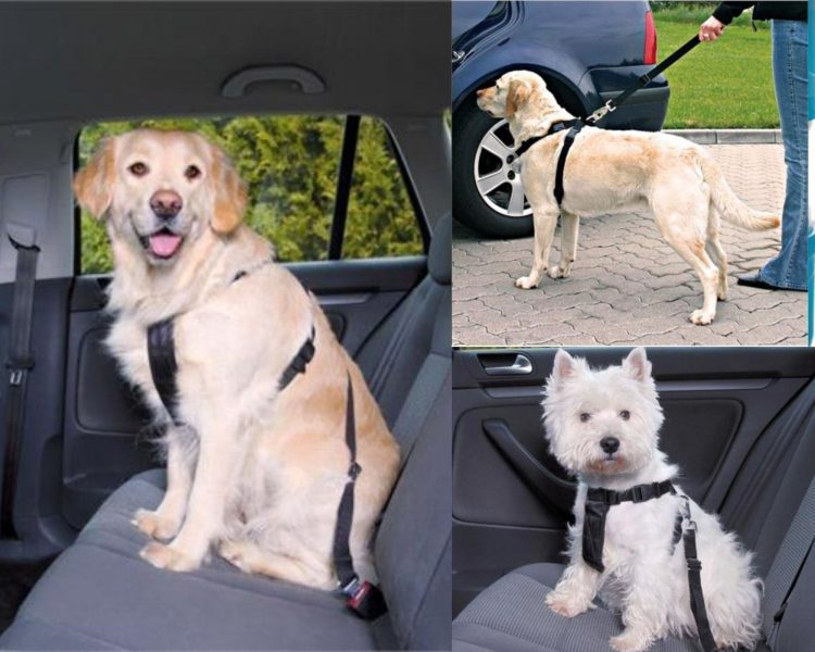 safety harness for travelling with pets