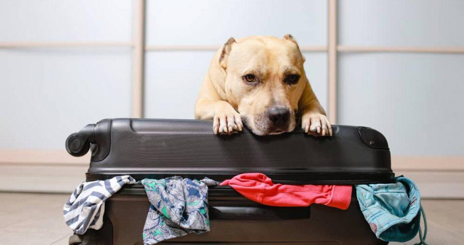bringing dog on holidays