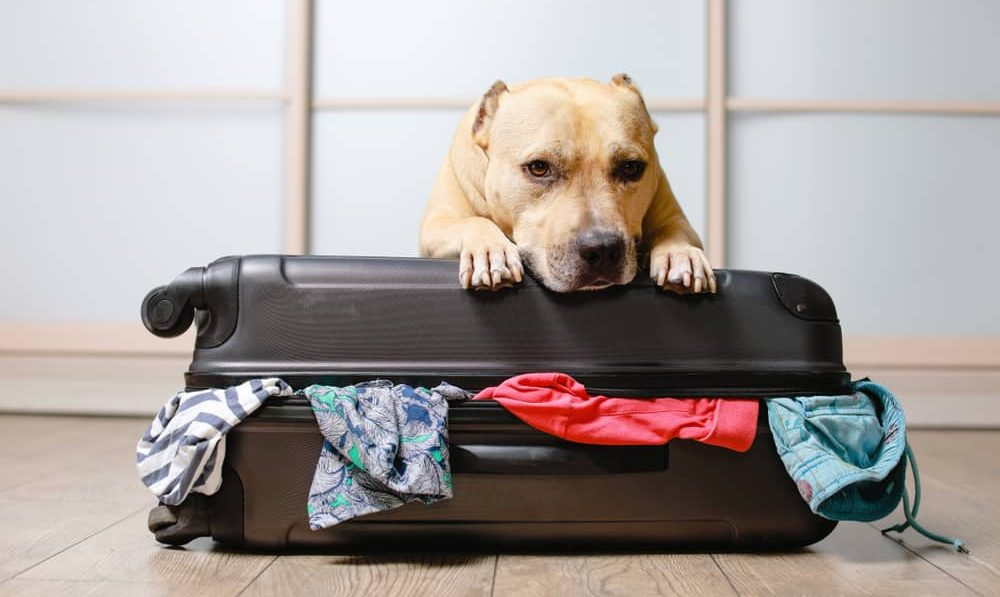 top 10 accessories for travelling with pets
